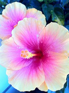 This hibiscus is one of the many beauty's in nature More #hibiscusflower
