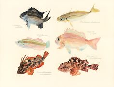 Japanese Artist Creates Delicate Watercolor Paintings of Fish Every Week - My Modern Met