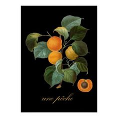 Une Pche (French Vintage Peach Illus) Posters