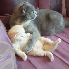 Cat lover dating video bobby kellar