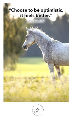 """""""Choose to be optimistic, it feels better."""" ― Dalai Lama XIV Quote - Zitat - of the day - horse"""