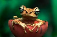 the rainforest animals - Google Search