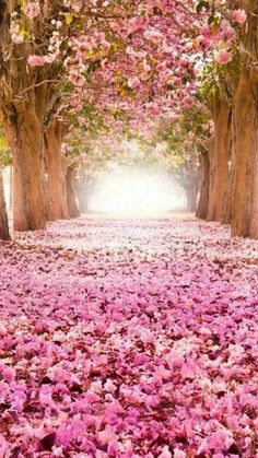 This is the garden I wish I had...notice how bright the flowers are, and how clear the path is.