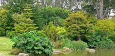 San_Francisco_Botanical_Garden_pond_2-586x286.jpeg (586×286)