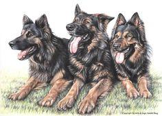 Drei Schäferhunde von Arts & Dogs by Nicole Zeug auf DaWanda.com
