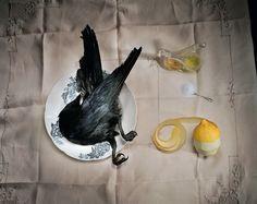 'Crow with salt' 2003 -