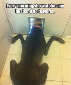 Every Morning She Watches My Husband Go To Work, Click the link to view today's funniest pictures! Reminds me of Baily,,