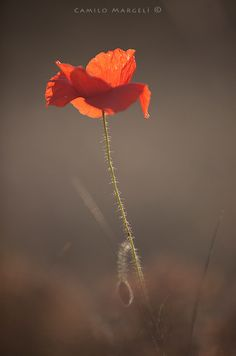 Red Spring (XXIII) by Camilo Margelí on 500px