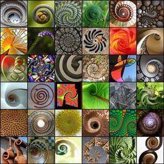 Nature's Art: Universal Spirals and Fibonacci   Visual*~*Revolution   Scoop.it