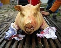 Imagini pentru obiceiuri de craciun din zona ardealului Animals, Animales, Animaux, Animal, Animais