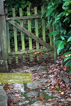 GAP Gardens - Old wooden garden gate and autumn leaves on pathway - Image No: 0160695 - Photo by Abigail Rex Old Garden Gates, Wooden Garden Gate, Wooden Gates, Vegetable Garden, Garden Plants, My Flower, Flowers, Garden Steps, Pathways