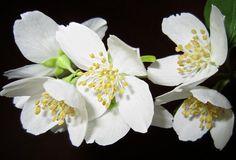 Alecrim, erva de São João, jasmim e salgueiro branco são algumas das opções indicadas para o tratamento de casos de depressão.