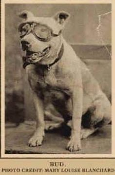 Lets remember who was known as Americas Dog on Memorial ...