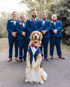 Funny Animal Pictures, Funny Animals, Cute Animals, Dog Rates, Wedding Photos, Wedding Day, Wedding Invitations Online, Funny Cute, Perfect Wedding