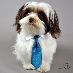 Satin Teal Print Dog Neck Tie & White Collar   Neiman Barkus Couture - Tiny thru Large Dog Sizes.  Made in the USA.  Order Yours Today!