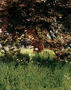 White sweet rockets and grape hyacinths mingle among tall grasses underneath a purple-leafed cherry plum. Stella McCartney's country home hideaway. Photographed by Bruce Weber for Vogue Stella Mccartney, Modern Country Style, Call Of The Wild, English Country Gardens, Country Estate, Garden Inspiration, Countryside, Garden Design, Landscape