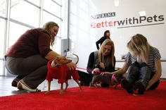 At Purina's Better With Pet Summit, there were a variety of special guests that attended,  including Tuna Melts My Heart