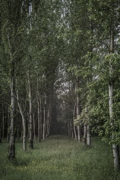 https://flic.kr/p/GPXJsy | Transition | Passaggio alberato