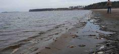 В феврале текущего года журналисты издания «Экология регионов» подготовили публикацию на основе мониторинга российских СМИ, посвященную влиянию деятельности гидроэлектростанций на водные