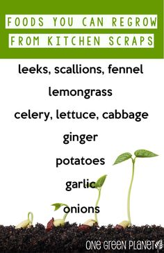 From the Chopping Block to New Life: How to Regrow Common Vegetables http://onegr.pl/1iE6P1a #diy #gardening #reuse