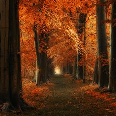 The way Home by J-W v. E., via 500px
