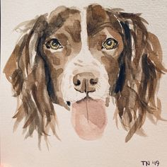 Springer Spaniel, Spaniels, Cocker Spaniel, Brittney Spaniel, Working Cocker, Water Colors, Kawaii Drawings, Animal Paintings, Christian Quotes