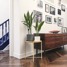 Let Patch help you bring greenery into your home with Living Room Plants. Delivered to your door throughout the UK, Patch makes urban gardening stress-free. Best Office Plants, Cast Iron Plant, Living Room Plants, Perfect Plants, Snake Plant, Calathea, Patch, Indoor Plants, Garden Plants