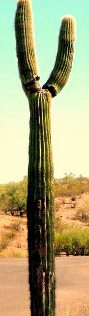Prickly; On the Road, Arizona