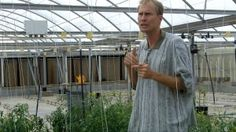 Dr. Kevin Crosby - Whitefly, tomato growers find truce in new Texas variety
