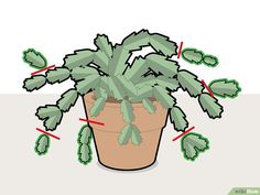 How to Prune a Christmas Cactus. Named after the time of year that they bloom in the Northern Hemisphere, Christmas cactus plants are beautiful and easy to maintain in the right conditions. The simple process of pruning can help grow a. Succulent Gardening, Cacti And Succulents, Planting Succulents, Cactus Plants, Garden Plants, Planting Flowers, Indoor Cactus, Cactus Art, Cactus Flower