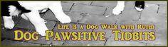 Dog Pawsitive Tidbits http://www.dogpawsitivetidbits.com/