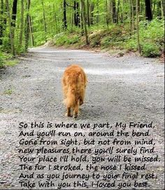 Remarkable Dog Training Tips For The Average Joe Ideas. Awesome Dog Training Tips For The Average Joe Ideas. Pet Loss Quotes, Dog Quotes, Animal Quotes, Dog Sayings, Pet Loss Grief, Loss Of Dog, Dog Loss Poem, I Love Dogs, Cute Dogs