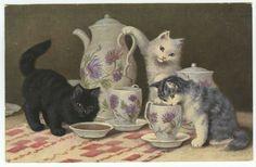 Cat Art Postcard Artist Signed Sperlich Kittens Tea Set on Table c1910