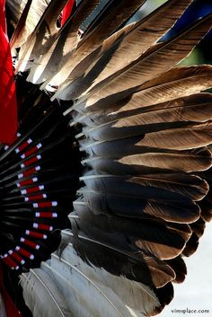 feathers are a significant part of regalia