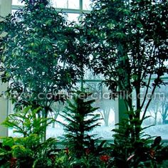 Commercial Silk Int'l worked closely with the client to demonstrate some of the many design possibilities that indoor atrium plants and planters can provide for office buildings. http://www.commercialsilk.com/artificial-plant-case-study_indoor-artificial-atrium-plants-planters-for-office-buildings_29.aspx