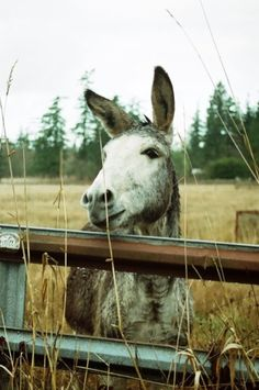 sweet.flirty.donkey. Valentines Day  2010 photo by Charity E. Serdahl