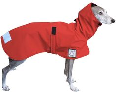 Dog raincoat. Love this since my pooches are such babies about getting wet!
