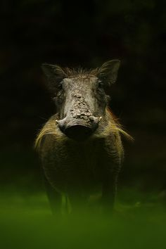 """""""I do,"""" said Warthog, """"What are we waiting for. We have to get to the king!"""" And off they went!"""