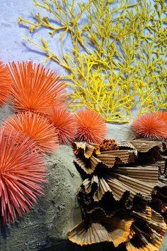 Anthropologie window display for Earth Day Colored toothpick sea urchins, corrogated cardboard reef?