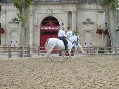 Rencontres equestres mediterraneennes