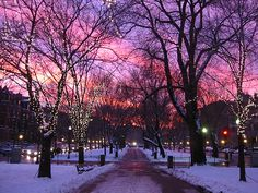 beautiful cold lights night colors snow sunset tree winter