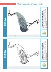 """Dzień Ptaków Wędrownych – pakiet edukacyjny: Karty """"Skrzydlaci posłańcy wiosny"""" Whale, Animals, Whales, Animales, Animaux, Animal, Animais"""
