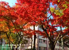 やはり赤い葉が好きです。 http://palette.blush.jp/self-reform/2013/11/post-103.html