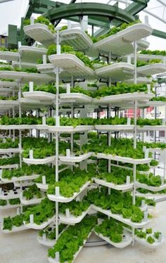 To grow one million heads of lettuce using conventional agriculture methods in the US requires either 16 acres of land in the Northern states, 8 acres of land in the Southern states, or .9 acres in a traditional hydroponic greenhouse operation. Vancouver-based Valcent Products Inc. (OTCBB: VCTZF) claims that it can beat those numbers handily and produce the same amount of lettuce sustainably on just .16 acres with its patented hydroponic vertical growing system, VertiCrop™.