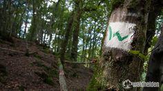 Ich war auf dem Westerwaldsteig wandern. Meinen Erfahrungsbericht und warum der Westerwaldsteig einer der besten Wanderwege Deutschlands ist, liest du hier!