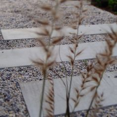 gravel path Gravel Path, Saint Jean, Paths, Gardens, Garden Landscaping, Atelier, Gravel Pathway, Gravel Driveway, Walkways