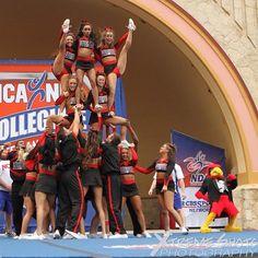 UofL Cheerleaders Daytona Beach 2013. Gold...