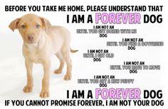 I am a FOREVER dog