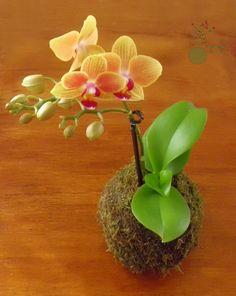 """Kokedama """"Mini"""" Orquídea."""