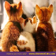 Curious furballs - #showmecats #thecurious